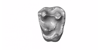 Tiny Fossil Tooth Found in the Amazon May Have Come From Ancient, Baseball-Size Monkey