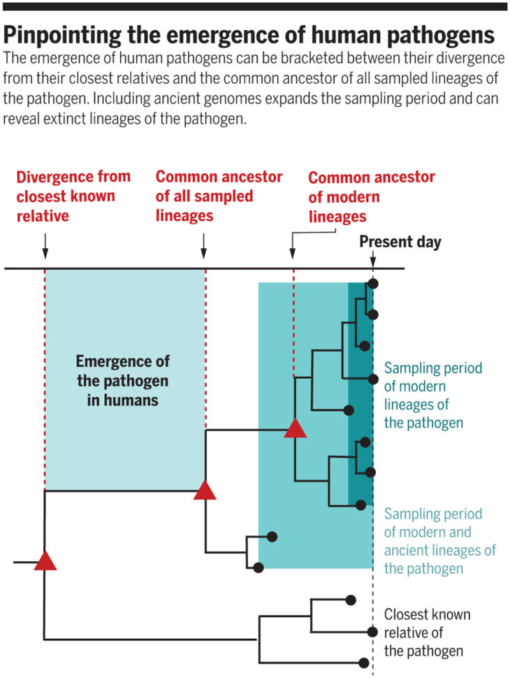 Dating the emergence of human pathogens