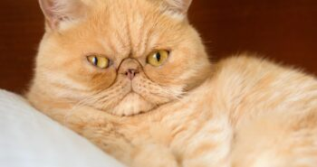 Study: Women Are Less Attracted to Men Who Have Cats In Their Dating Profile Pics