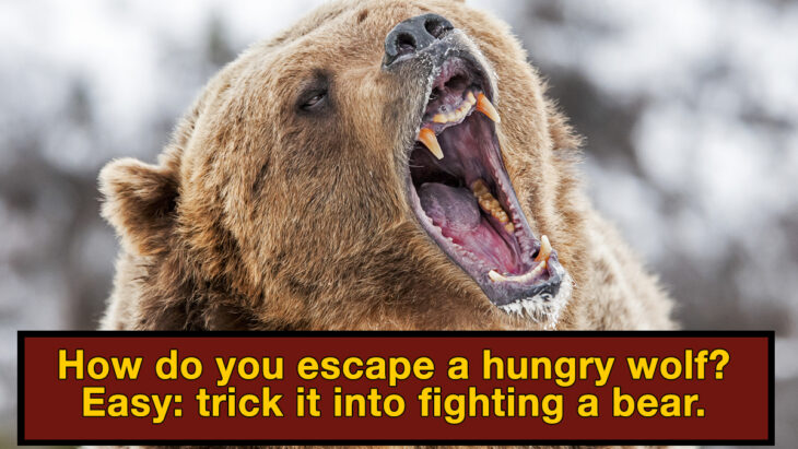6 Dangerous Situations People Escaped In The Craziest Way Possible
