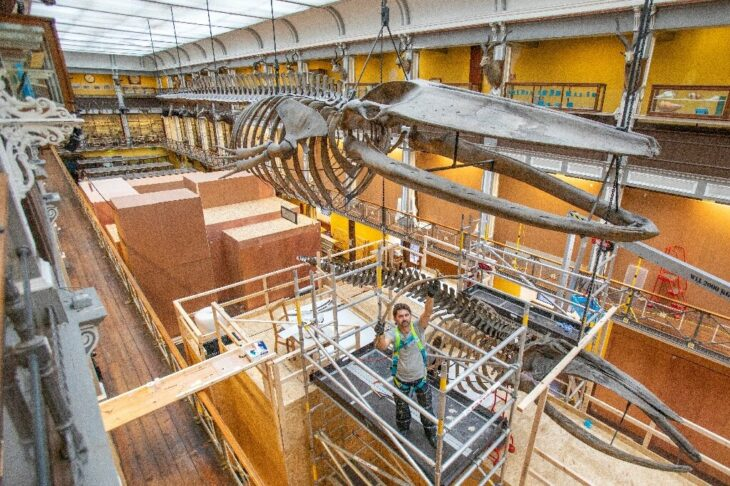 Leviathan task: saving the whales in Dublin's 'dead zoo'
